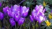 stockfresh_370574_spring-flowers_sizeS.jpg